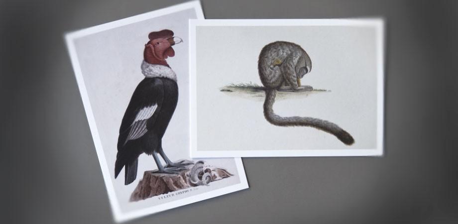 HAAB Weimar – Reise in die Bücherwelt – Postkarten